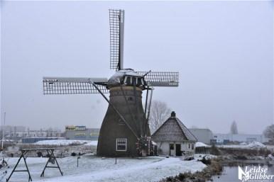 Sneeuw 31 januari (15)