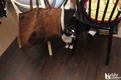 Kattencafé Sophie (11)