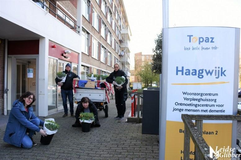 Tulpen Haagwijk CHDR Rederij (42)