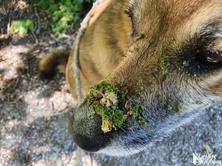 Happy groene hond (5)