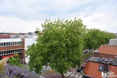 Roof bar PLNT (18)