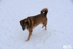 6 Sneeuw De Leidse Hout (42)