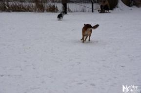 6 Sneeuw De Leidse Hout (41)