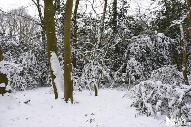6 Sneeuw De Leidse Hout (17)