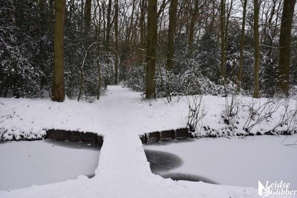 6 Sneeuw De Leidse Hout (12)