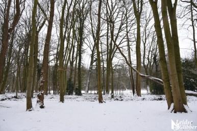 6 Sneeuw De Leidse Hout (6)