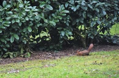 eekhoorn (2)
