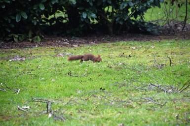 eekhoorn (5)