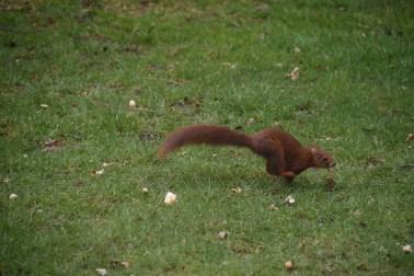 eekhoorn (20)