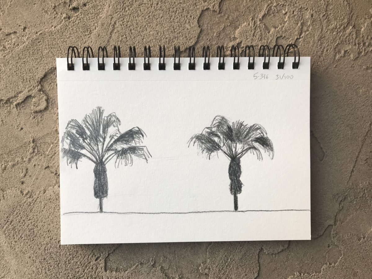 palm trees, 100 day project