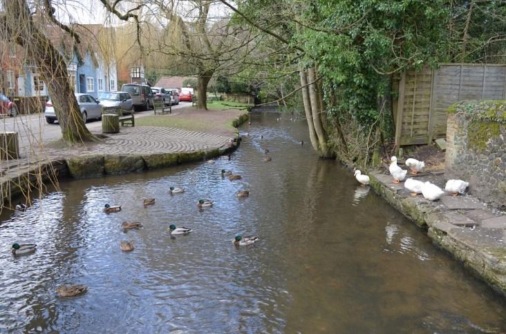 Shere Pond