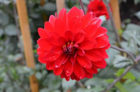 11.savillgardensflower1steveb
