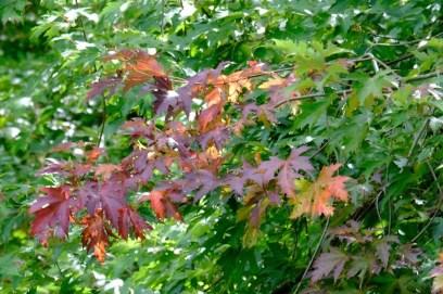 13.autumnleavesrl