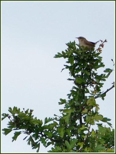 birdintreetop