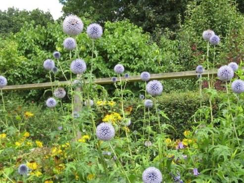 gardenvisittohatchroadpilgrimshatch5