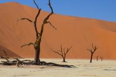 Petrified Acacia Tree, Sossusvlei, Namibia