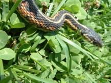 April26,2008-SnakesNstuff 021