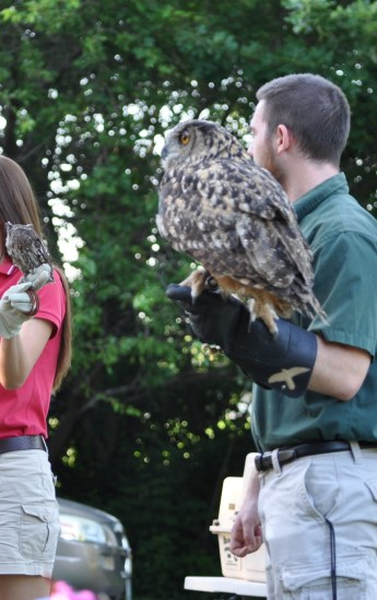 Oliver's size in relation to Xena, the Eurasian eagle owl. Believe it or not, Xena weighs in at around only 6-7 pounds.