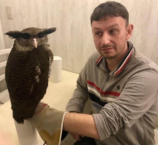 Mr. President, a Southeast Asian Malay Eagle Owl Akiba Fukurou Owl Cafe Tokyo