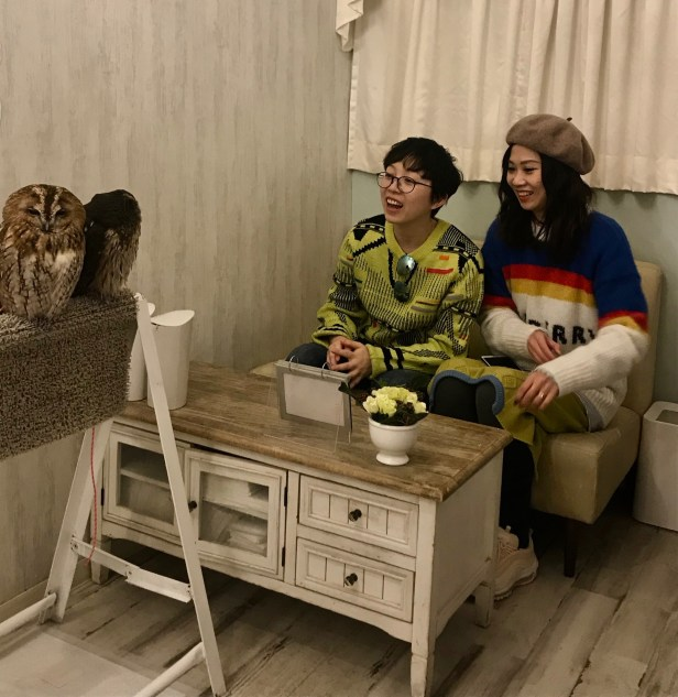 Visit Akiba Fukurou Owl Cafe Akihabara Electric Town Tokyo