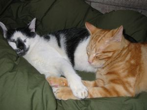 """Kizzy and Chester """"At Ease"""""""