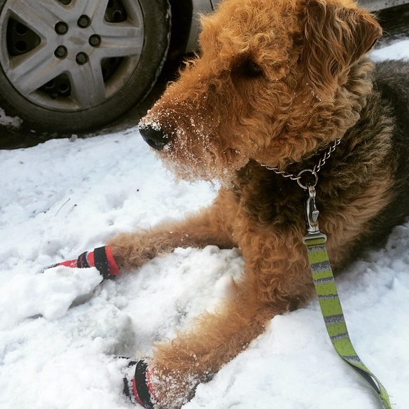 Bailey - Ultra Paws Dog Boots