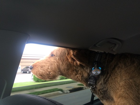 Bailey loves a road trip!