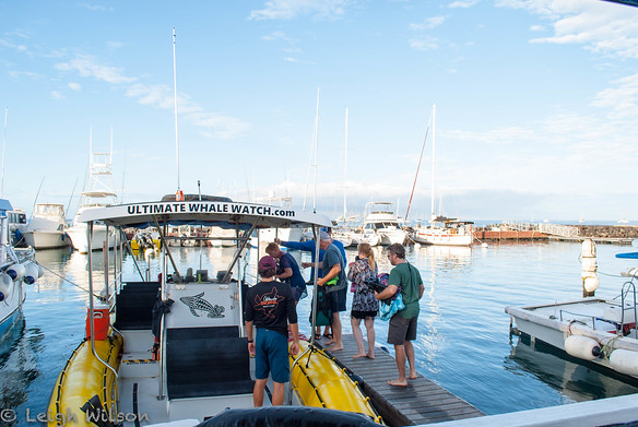 Ultimate Whale Watch tour