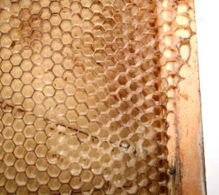 honey-comb-edit