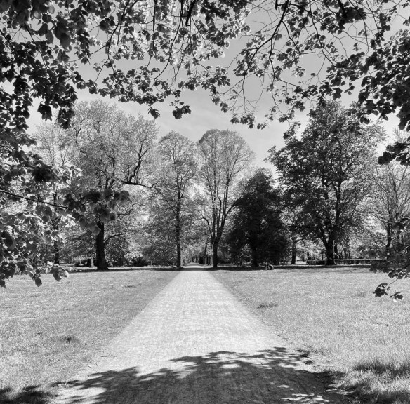 One of the main axial lines of the former New Johannis Cemetery