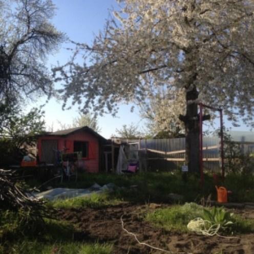 My little garden in progress. photo by maeshelle west-davies