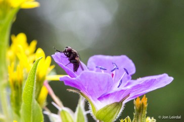 Macro - fly and flower