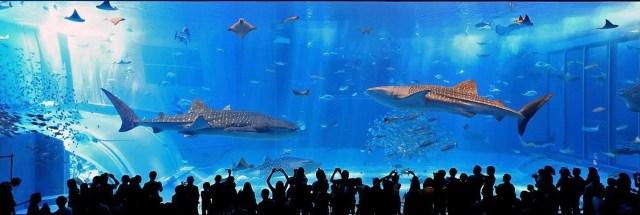 美ら海水族館 混雑