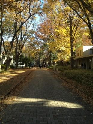 Fête annuelle de l'université Todai, Novembre, avec grand soleil et quasiment 25°C ce jour là.