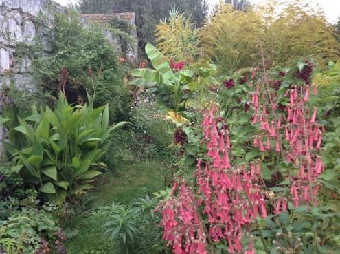 Fuchsia du Cap, cannas rustiques le jardin d'épices Laurent Lafaille