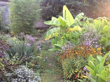 cannas rustiques, bananiers, yucca, le jardin d'épices Laurent Lafaille