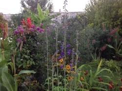delphinium, massif d'été, le jardin d'épices Laurent Lafaille