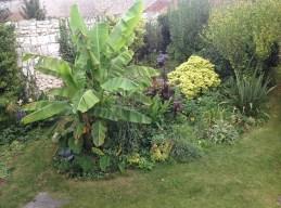 musa basjoo le jardin d'épices Laurent Lafaille
