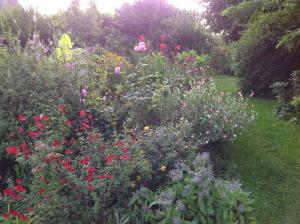 Fleurs et permaculture