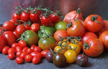 Des tomates en pleine forme !