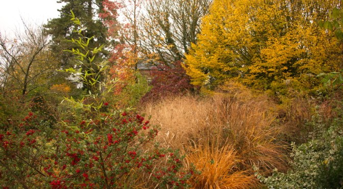 Novembre au jardin… Max vous emmène?