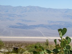 deathvalley-usa-park-californie-road-cactus-desert