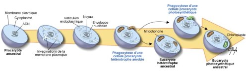 Evolution-Eucaryotes
