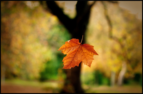 falling-leaf1