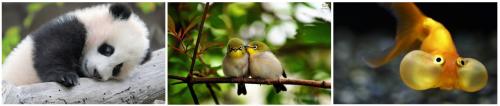 """1ère image récupérée sur Google Image en tapant successivement """"Cute mamal"""" """"Cute bird"""" et """"Cute fish"""". No comment."""