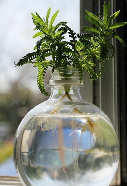 Comment Bouturer Dans L'eau ? : comment, bouturer, l'eau, Bouturer, L'eau, Quelles, Plantes