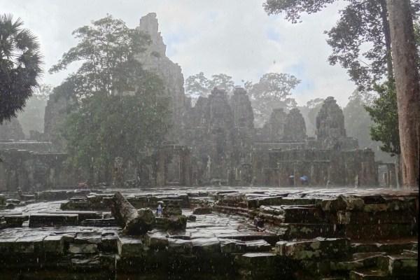 grain averse tropicale à Angkor
