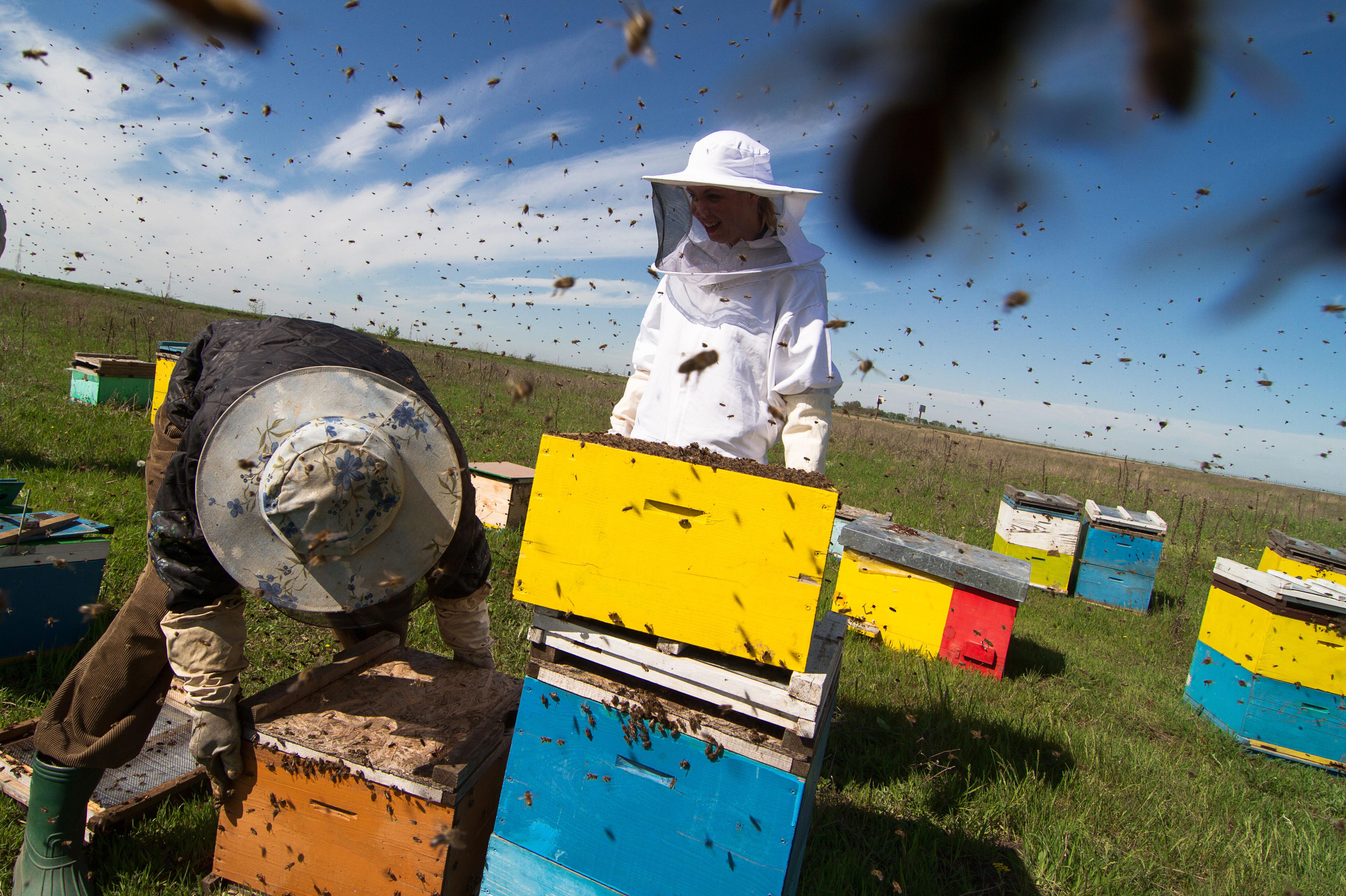 Zdrowienawakacjach.pl: Pogryzienia przez owady, w tym osy, pszczoły i szerszenie. Poradnik dla Ciebie i Twoich Bliskich.