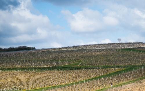 vigne-arbre-femme-Saone-et-Loire-3-1110