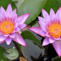 Les fleurs en Inde / Indian flowers (5)